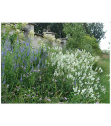 Zámecká louka - semena lučních květin a trav - 50 g