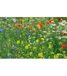 Vytrvalé květy pro včely - osivo Planta Naturalis - směs lučních květin a trav - 10 g