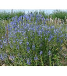 Modrá louka zvonečková - osivo Planta Naturalis - směs lučních květin a trav - 10 g