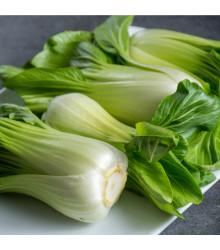 Pak Choi Hanakan F1 - Brassica rapa var rosularis - osivo pak choi - 70 ks