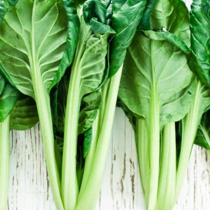 Tatsoi - Asijská zelenina - prodej semen asijské zeleniny - 100 ks