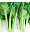 Tatsoi - Asijská zelenina - prodej semen asijské zeleniny - 0,2 gr