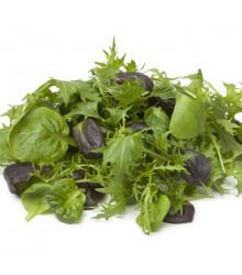 Mix aromatických salátů - osivo salátu - 60 ks