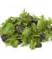 Mix aromatických salátů - semena salátu - 0,1 gr