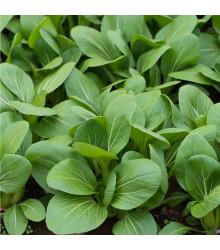 Komatsuna - Zelená hořčice - semena komatsuny - 7 ks