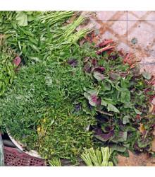 Mix orientálních salátů - semena salátu - 50 ks