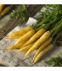 Mrkev žlutá Lobbericher - prodej semen mrkve - 1 gr