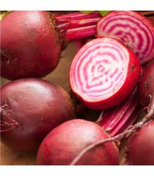 Řepa salátová Chioggia - Beta vulgaris - osivo řepy - 50 ks
