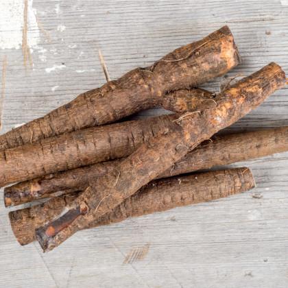 Černý kořen- Scorzonera hispanica- semena kořene- 2 g