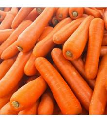 Mrkev Rothild - Daucus carota - osivo mrkve - 900 ks