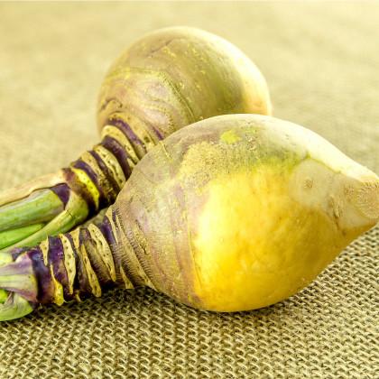 Tuřín Dalibor - Brassica napus var. napobrassica - osivo tuřínu - 250 ks