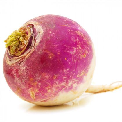 Vodnice kulatá červenobílá  - Brassica rapa L. - prodej semen vodnice - 350 ks