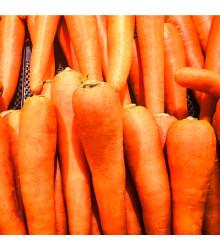 Mrkev Rote Riesen - Daucus carota - osivo mrkve - 1 gr