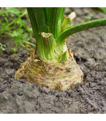 Celer bulvový - Mars - semena celeru - 0,3 gr - osivo