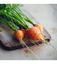 Mrkev kulatá k rychlení Pariser Markt - Daucus carota - osivo mrkve - 900 ks