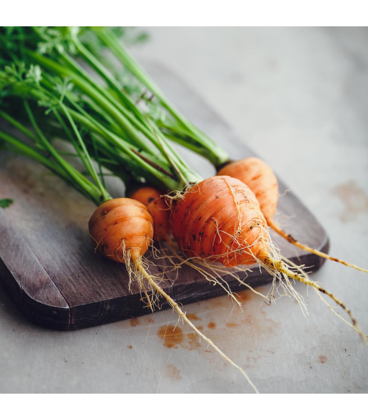 Mrkev kulatá k rychlení - Pariser Markt - semena Mrkve - 1 gr