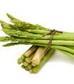 Chřest lékařský- Asparagus officinalis- semena chřestu- 35 ks
