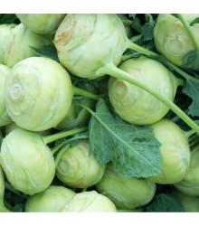 More about Kedluben bílý Lanro - Brassica oleracea - prodej semen - 300 ks