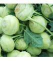 Kedluben bílý Lanro - Brassica oleracea - prodej semen - 1 gr
