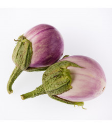 Lilek Baklažán - Rosa Bianca - prodej semen lilku - 6 ks
