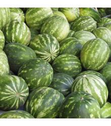 More about Meloun vodní Sugar baby - Citrullus lanatus - osivo melounu - 7 ks