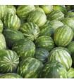Meloun vodní Sugar baby - Citrullus lanatus - semena melounu - 7 ks