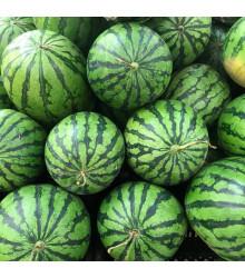 Meloun vodní Crimson Sweet - Citrullus lanatus Matsum et Nakai - semena melounu - 6 ks