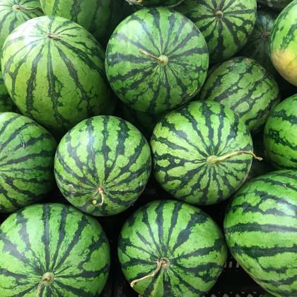 Meloun vodní Crimson Sweet - Citrullus lanatus Matsum et Nakai - osivo melounu - 6 ks