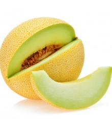 Meloun galia Exelor F1 - Cucumis Melo - semena melounu - 5 ks