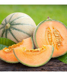 Meloun cukrový - Maltese F1 - semena melounu - 8 ks