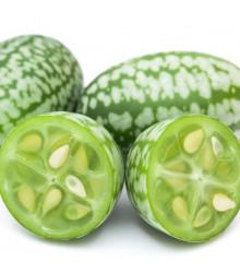 Mexická mini okurka - Zehneria scabra - prodej semen Praha - 5 ks
