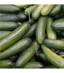 Okurka salátová Tellus F1 - okurka setá salátová - semena okurky - 4 ks