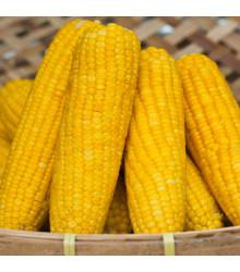 Kukuřice setá Tatonka F1 - Zea Mays - semena kukuřice - 15 ks
