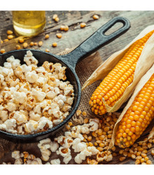Kukuřice pukancová F1 Nana - Zea mays - osivo kukuřice - 15 ks