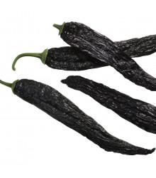 Chilli Pasilla Bajio - Capsicum annuum - semena chilli - 7 ks