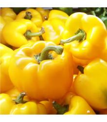 Paprika Monte - Capsicum annuum - prodej semen papriky - kvalitní semena - 5 ks