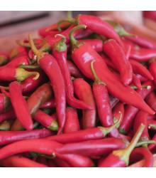 Chilli Kajenský pepř - Capsicum annuum - semena kajenského pepře - 8 ks