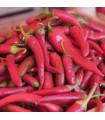 Kajenský pepř- Cayenne peper- semena- 8 ks