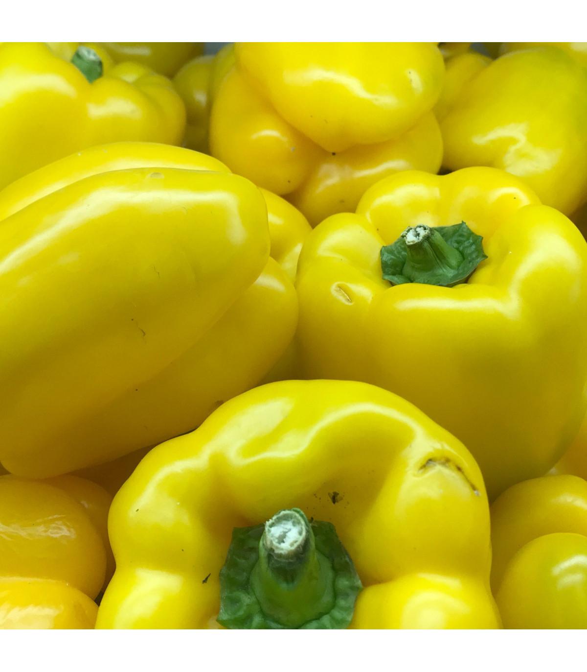 Paprika Pusztagold roční zeleninová - Capsicum annuum - semena - 9 ks