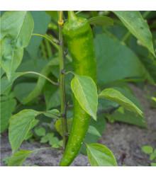 More about Chilli Zlaté řecké feferonky - semena - 7 ks