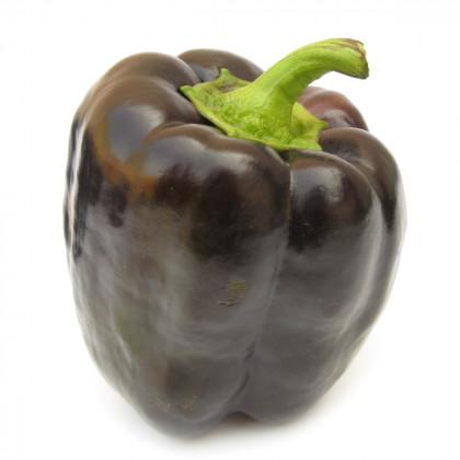 Paprika fialová kráska - Semena papriky tmavě fialové - 9 ks
