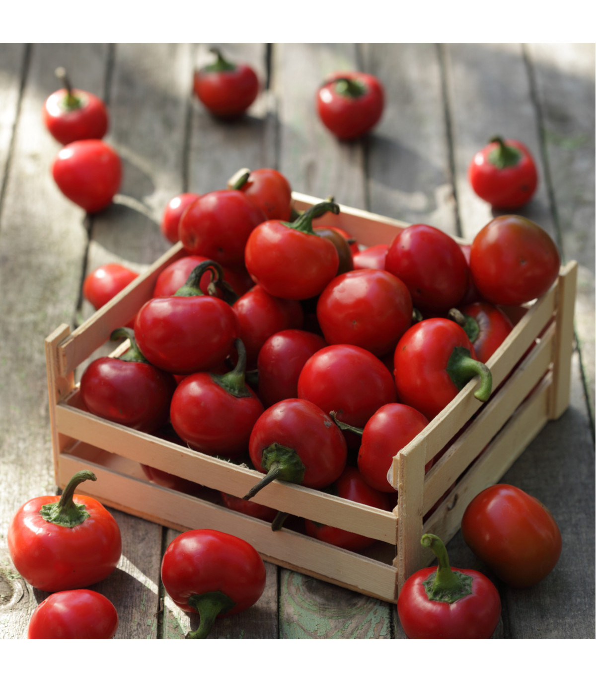 Paprika Red Cherry - Capsicum annuum - osivo papriky - 7 ks