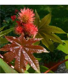 Skočec obecný červený- Ricinus communis gibsoni - prodej semen skočce 3 ks