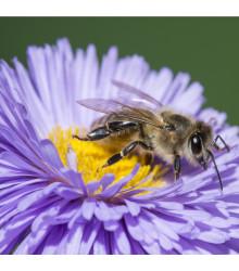 More about Medonosné květy pro včely - semena medonosných květů pro včely - 10 gr