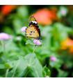 Květinová směs pro motýly- semena pro motýly- 3 gr