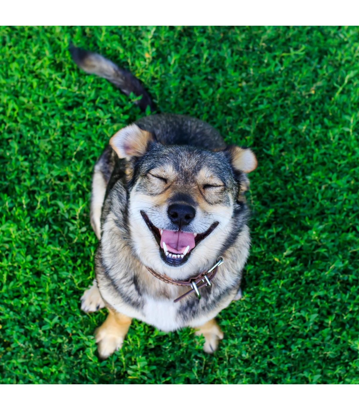 Tráva pro psy - osivo Golden Line - směs - 19 g