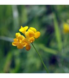 Štírovník růžkatý - rostlina Lotus corniculatus - prodej semen - 100 ks