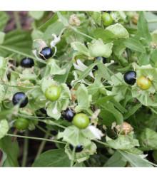 More about Rulík zlomocný - Atropa belladonna - prodej semen rulíku - 10 ks