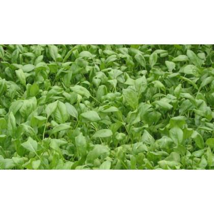 BIO Špenát setý - Spinacia oleracen L. - semena bio osiv - 12 gr