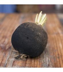 BIO Ředkvička černá kulatá - Raphanus sativus - bio semena ředkvičky - 45 ks